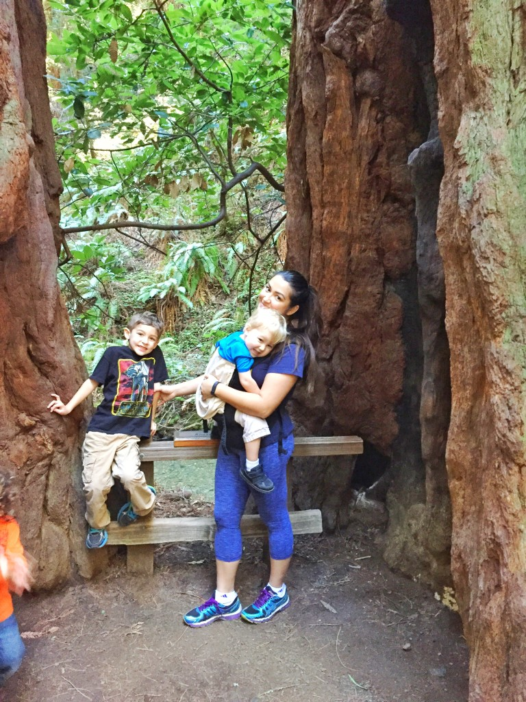 muir woods with kids